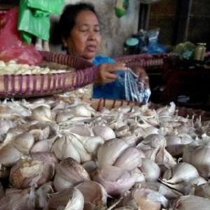 DPR Dukung Peningkatan Produksi Bawang Putih