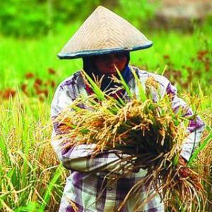 Pencapaian 3 Tahun Sektor Pertanian Di Era Nawa Cita