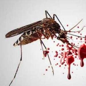 ITB Gandeng NCHU Dan CDC Untuk Perangi Demam Berdarag Dengue