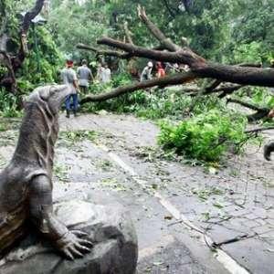 Beberapa Ranting Pohon Rawan Patah Dipangkas
