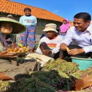 Kementan Bersinergi Tuntaskan Daerah Rentan Rawan Pangan