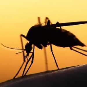 Tuan Rumah PON 2020, Enam Kota Di Papua Ini Pastikan Tidak Ada Wabah Malaria