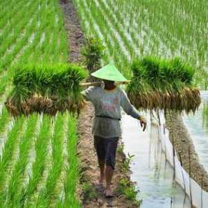 Ekspor Pertanian Meningkat, Indonesia Tidak Perlu Lagi Andalkan Impor
