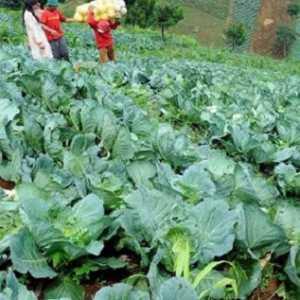 Impor Pertanian Bukan Hal Tabu, Asalkan Nilai Ekspor Tetap Lebih Besar