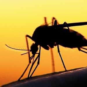 Di Tengah Pandemik Covid-19, Angola Hadapi Kasus Kematian Yang Tinggi Karena Malaria