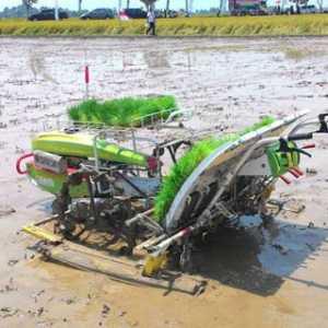 BPS: Hanya Sektor Pertanian Yang Tumbuh Positif