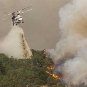 Helikopter Pemadam Kebakaran California Jatuh, Sang Pilot Meregang Nyawa