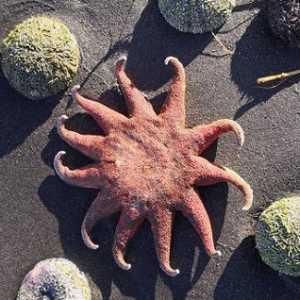 Kematian Massal Hewan Laut Di Kamchatka Masih Misterius, Penyebab Polusi Belum Dipastikan