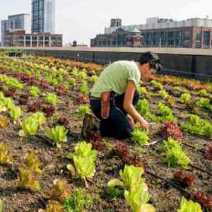 Urban Farming Kian Populer, Pemprov DKI Diminta Fasilitasi Masyarakat