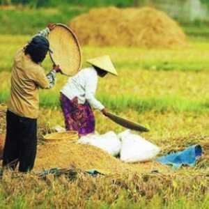 Petani: UU Cipta Kerja Akan Bendung Alih Fungsi Lahan Pertanian Dan Tingkatkan Kesejahteraan