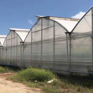 Ada Kandungan Organisme Berbahaya, Rusia Tidak Ijinkan Lagi Azerbaijan Impor Tomat Dan Apel