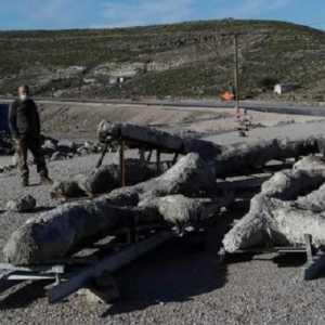 Fosil Pohon Langka Berusia 20 Juta Tahun Ditemukan Di Pulau Lesbos