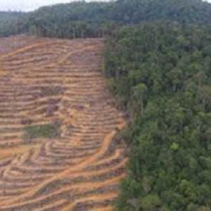 WALHI: 30 Persen Batas Kawasan Hutan Dihapus Perparah Bencana Hidrometeorologi