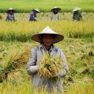 Keluhkan Dampak Woro-woro Impor Oleh Pemerintah, Pegiat Pertanian: Beras Bukan Hanya Komoditas Ekonomi Tapi Juga Politik