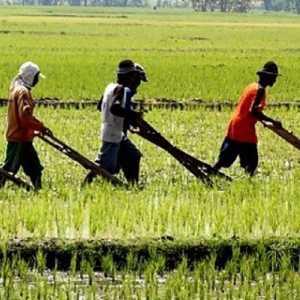 Rencana Impor Beras Dilakukan Saat Petani Masih Jauh Dari Sejahtera, Kapan Majunya Pertanian?