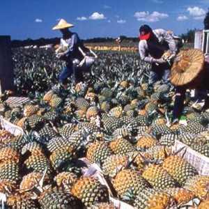 Larangan Impor Nanas Taiwan Oleh China Berujung Pada Tudingan Praktik Politik