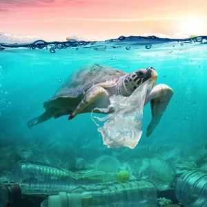 Cari Solusi Inovatif Sampah Plastik Di Laut, UNDP Gelar Kompetisi EPPIC