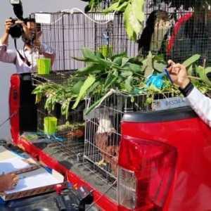 BKSDA Sita Satwa Dilindungi Dari Rumah Dinas Gubernur Aceh