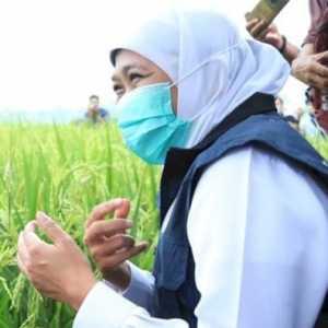 Stok Beras Melimpah, Gubernur Khofifah: Jawa Timur Tak Perlu Suplai Impor
