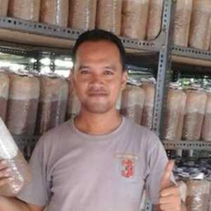 Pengusaha Dari Denpasar, Tertarik Bisnis Jamur Gara-gara Harganya Yang Wow Sekali