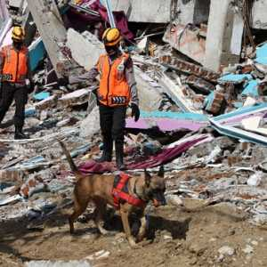 Kerahkan Anjing Pelacak, Polri Susuri Wilayah Banjir Dan Longsor NTT
